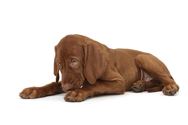 DWZ photo hond schaamte