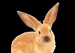 GEZ 1lag 6 konijn