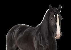 GEZ 1lag 8 paard