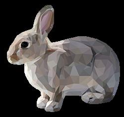 GEZ 1sec 3 konijn zit