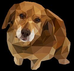 GEZ 1sec 5 hond zit
