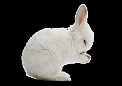 GEZ kk 6 konijn