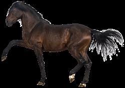 GEZ kk 8 paard